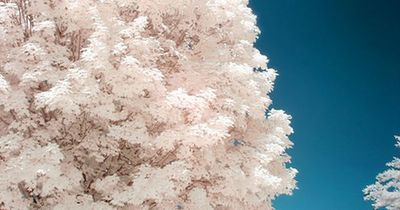 infrared photography by Chris Summerville, one day I will convert one of my cameras to infrared. Beautiful!