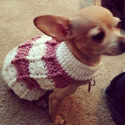 Simple Cables Dog Sweater pattern by Cobos Closet / crochet ideas and tips - ...