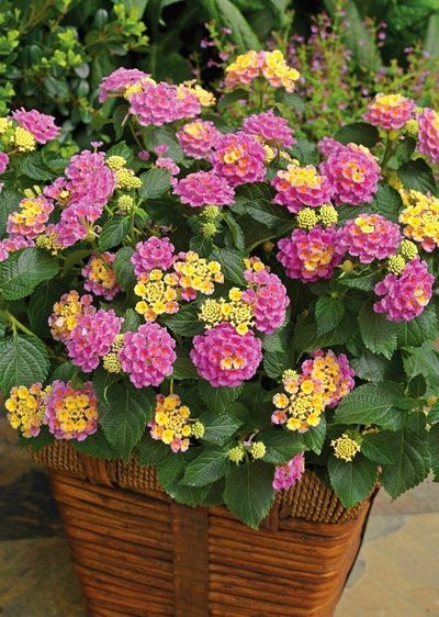 All plants need water to survive. However, like plants that require more water, there are plants that grow in lack of water. They are the best drought tolerant