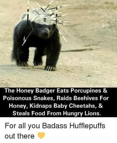 Image result for cute baby honey badger / Geeky stuff ...