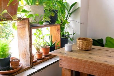 Adding a touch of green to your home with houseplants can do more than brighten your indoor space. All plants remove carbon dioxide from their environment and r