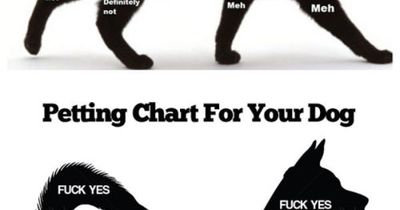 Pets Cat Petting Chart For Your Cat And