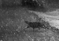 caught in the storm - cats / photography