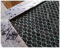squirrel proof salad garden, gardening, pest control, Make sure the net is tucked in firm against the soil