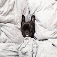 You can't make me get out of bed!