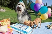 Dog Birthday Cake Recipes