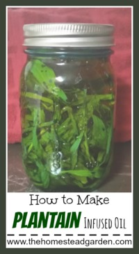 How to Make Plantain Infused Oil