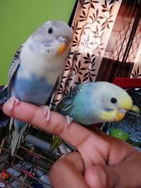 A blog for all animal lovers i can garantee you will feel the warmth of animals heart . Visit site :https://www.lovetukda.com