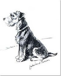 Lucy Dawson - Lakeland Terrier Painting