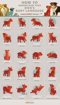 With this infographic, you can tell what your dog is thinking simply based on its body language.