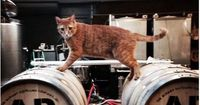 Grain stores in a Chicago distillery benefit from feral cat guards while the cats get a chance to have a happy home.