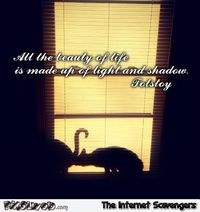 Tolstoy quote funny shadow #funny #humor #lol #funnyCat #PMSLweb