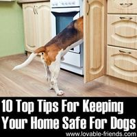 � This is valuable information and could save your dog's life! �