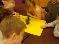 inquiry: which part of the plant grows new plants? dissect, choose your part, plant it.