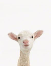If you love charming animal photography, you probably have already heard of Sharon Montrose. Known for her quintessential unique style that captures the simple