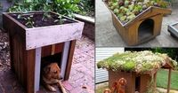 Green Roof on Your Dog's House