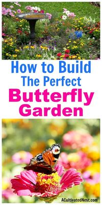 Butterfly gardens are beautiful, fun to build, and a great way to help out your local butterfly populations! If you want to build a butterfly garden in your yar