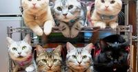 how to store and organize your cats