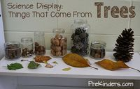 Nature collections are great for the science center. This is a collection I set up during our Forest unit because we learn all about trees, leaves, and animals