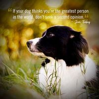 Your dog's opinion is the only opinion that matters #BorderCollie #funnydogquotes