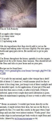 Natural FLEA & TICK spray...my dogs have not had fleas all summer and I only used this spray once!!
