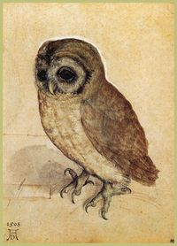 The Little Owl - Albrecht Durer. Love his paintings of animals and birds