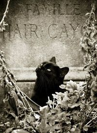 Ah ! My name is Lestat and I live in the cemetary ! Sniff, sniff...