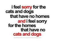 I feel sorry for the cats and dogs that have no homes and I feel sorry for the homes that have no cats and dogs ...