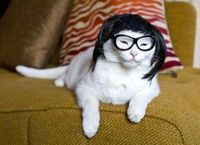 geek chic cat