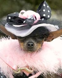 Meet the winners of our Halloween Pet Costume photo contest!