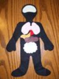 """A felt pattern for teaching kids about the """"layers"""" of the body (organs, bones, skin, clothes...)."""
