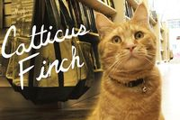 25 Literary Pun Names For Your Cat #cats #literature #puns
