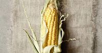Be sure to buy only ORGANIC corn from farmers you trust.....you don't want GMO's in your 'fresh' corn....NASTY!