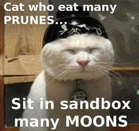 sand boxes, cat memes and cats.
