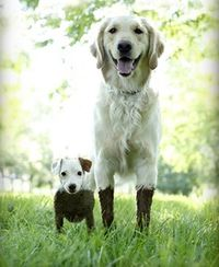 One large and one small dog both standing in the grass with mud a foot up their respective bodies.