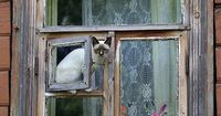 """""""There's a cat in the window And he's watching all the birds go passing by He'd love to fly out the window Go where the wind goes And so would I"""" ~Petula Clark"""