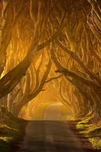It's hard to believe that up until 15 years ago, only locals knew about that spectacular road. The Dark Hedges in County Antrim, Ireland is a beautifully eerie