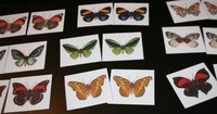 These Butterfly Matching Cards help children practice visual discrimination skills. We're getting ready to learn about bugs in my class because everywhere we lo