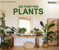 Air Purifying Plants  Looking to reduce toxins in your home? It's often the germs and toxins that you can't see that are the most harmful, but alas these air-cleaning plants will help you remove toxins and improve air quality. https://www.d...