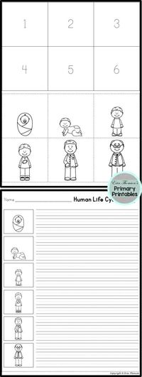 FREE Human Life Cycle Sequence ~ Includes boy and girl versions!