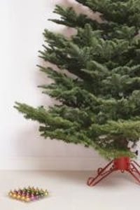 Keep your living Christmas tree alive. Here's how to make homemade Christmas tree food or cut flower preservative.
