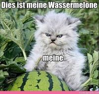 Haha. Somehow Being in German Makes It Funnier