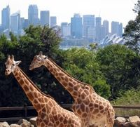 Park Hyatt Explores Sydney's Top Family Activities