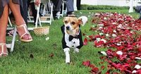 Doggy ring bearer