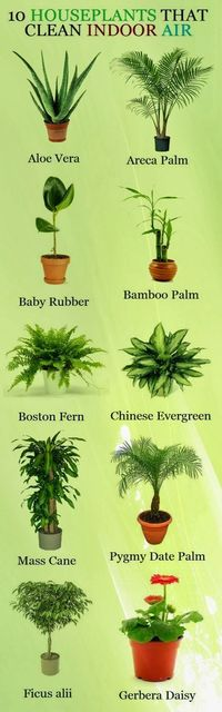"""Ten Houseplants That Clean Indoor Air. Looking at all the lists like this, I'm thinking that probably ALL houseplants """"clean the air."""""""