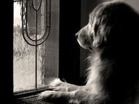 My Tippy does this at the dining room window where she can she the driveway...I can see her when I turn in.