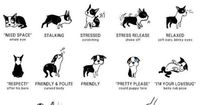 I have got to remember this for my english bulldog. It describes his every move. Especially the last one. :)