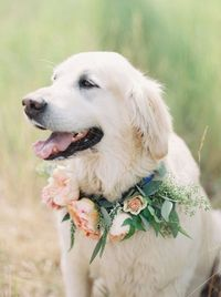 It seems like everyone includes their pets these days in their nuptials. If not the ceremony then the reception or even the pictures taken beforehand. With that
