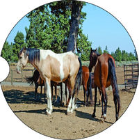 2 Absorbent Car Coasters of Horses #12. Car Accessories for her, Auto Coaster, Coaster, Cup Holder Coaster, Gift For Her, For Him $14.00