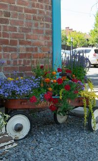 Great Ideas for Container Gardens, including images and recipes with specific plant names. Perfect for front porch or garden.